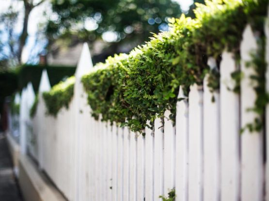 White Picket Fence with hedge
